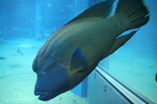 Aquarium Kaiyukan