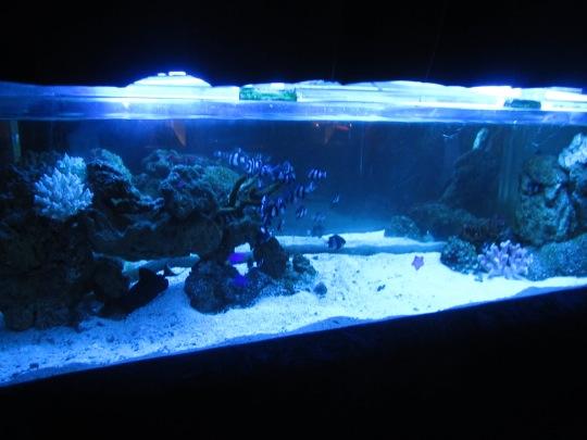 Aquarium Resto