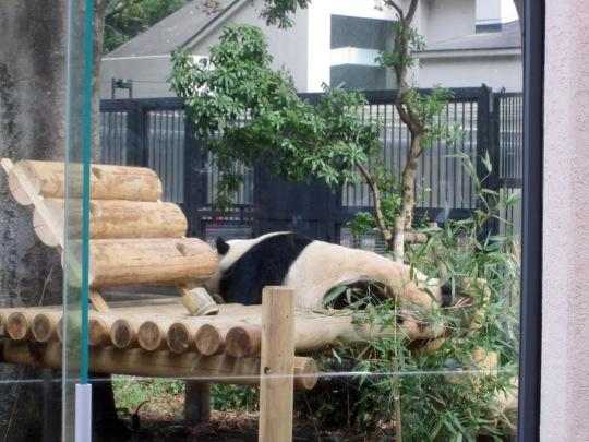 Panda Ueno Zoo