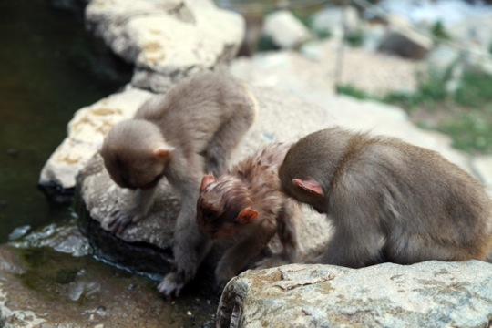 Onsen Monkey