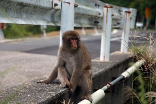Monkey route