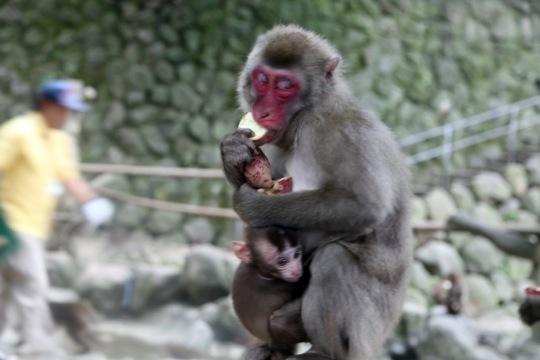 Takasaki Monkey Park