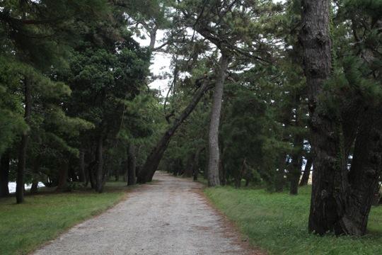 traversée pins