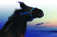 [Kinotayo] The Horses of Fukushima